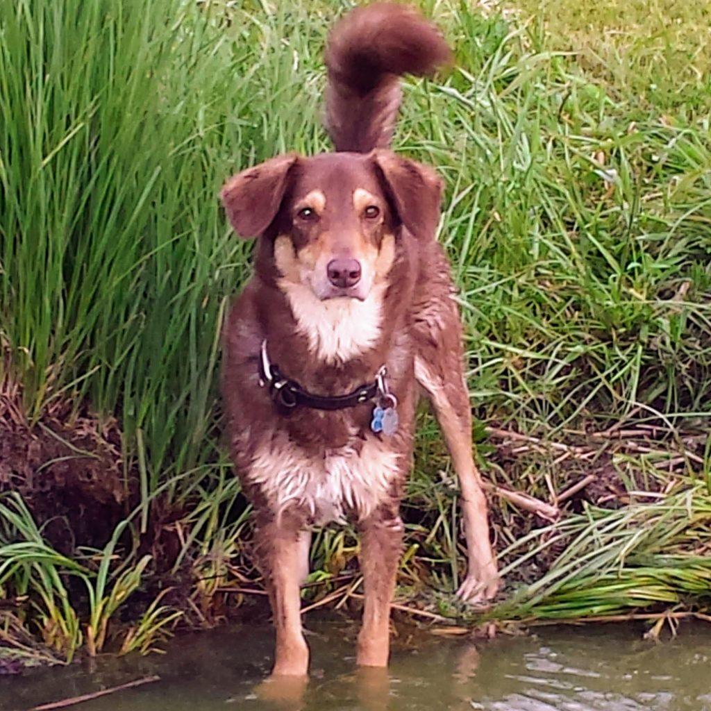 North Campervans sidekick Jake the Dog